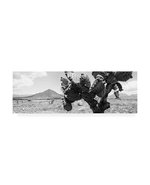 "Trademark Global Philippe Hugonnard Viva Mexico 2 Desert Cactus Canvas Art - 19.5"" x 26"""