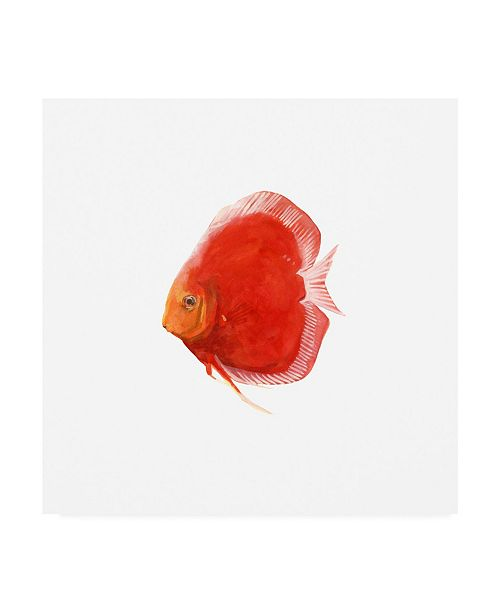 "Trademark Global Emma Scarvey Discus Fish V Canvas Art - 15.5"" x 21"""