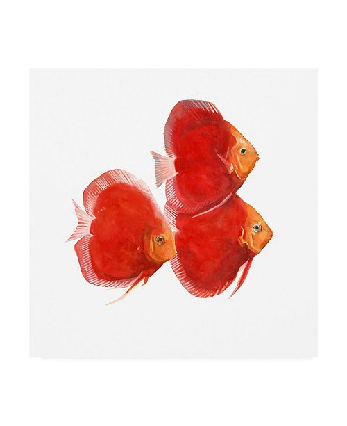 "Trademark Global Emma Scarvey Discus Fish VI Canvas Art - 36.5"" x 48"""