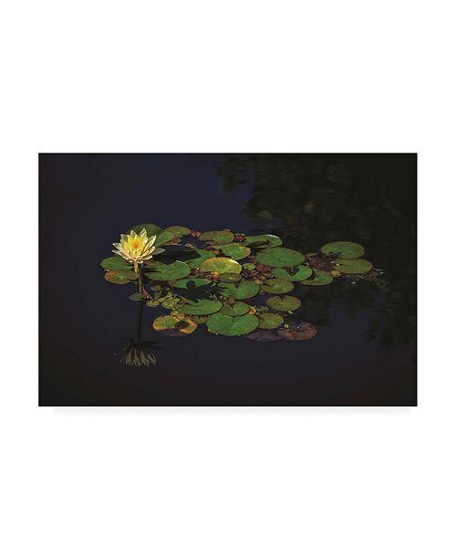 "Trademark Global Kurt Shaffer Photographs Water Lily in the Sun Canvas Art - 27"" x 33.5"""