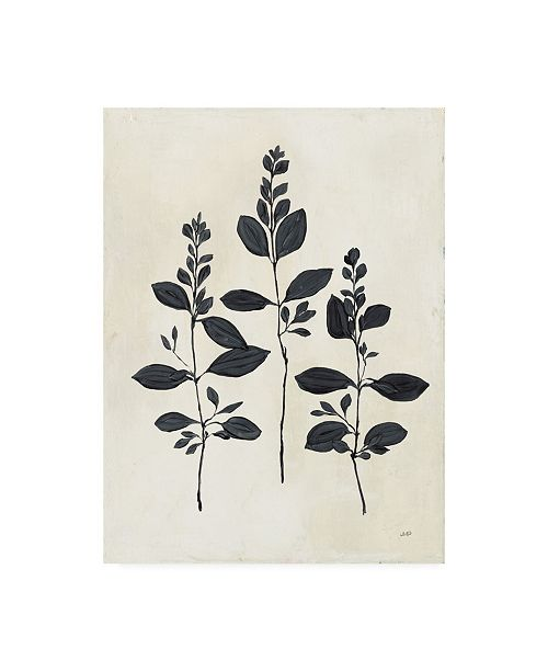 "Trademark Global Julia Purinton Botanical Study IV Canvas Art - 27"" x 33.5"""