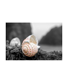 "Alan Blaustein Cresent Beach Seashell #1A Canvas Art - 27"" x 33.5"""