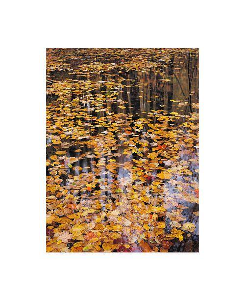 "Trademark Global John Gavrili Autumn Detail Canvas Art - 15.5"" x 21"""