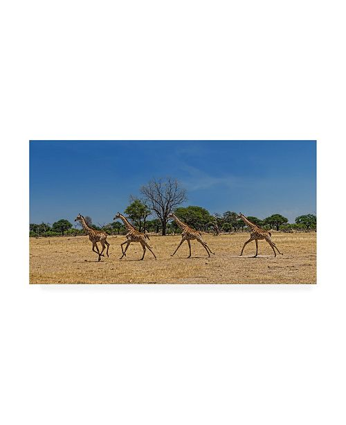 "Trademark Global Piet Flour Wild and Free Giraffes Canvas Art - 20"" x 25"""