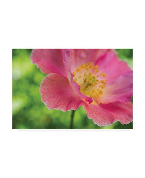 """Trademark Global Kurt Shaffer Pink Poppy Detail 2 Canvas Art - 15"""" x 20"""""""