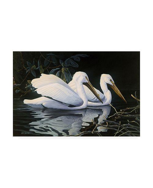 """Trademark Global Michael Budden Pelicans Swimming Canvas Art - 37"""" x 49"""""""