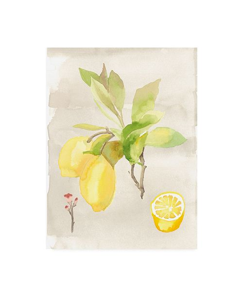 "Trademark Global Naomi Mccavitt Watercolor Fruit II Canvas Art - 20"" x 25"""