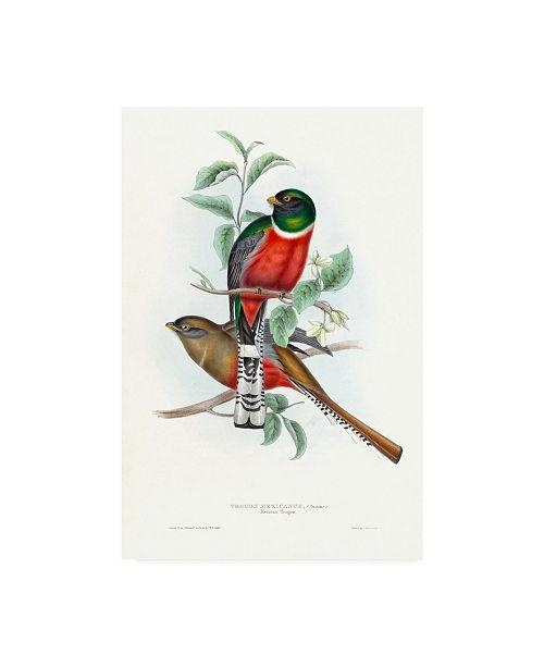 "Trademark Global John Gould Tropical Trogons V Canvas Art - 15.5"" x 21"""