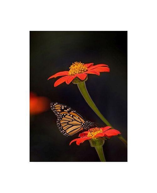 "Trademark Global PH Burchett Butterfly Portrait X Canvas Art - 15.5"" x 21"""