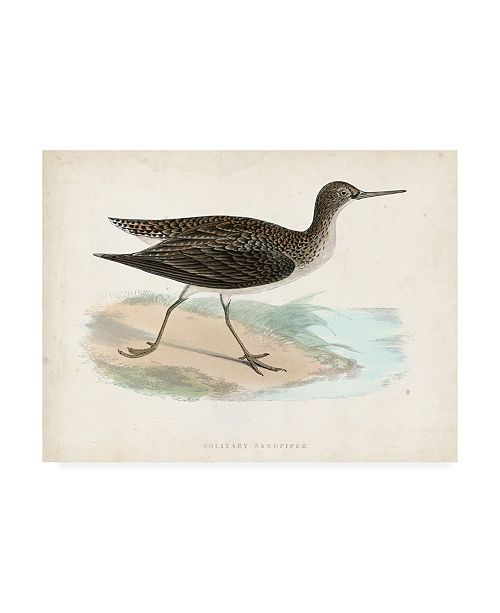 "Trademark Global Morris Morris Sandpiper VII Canvas Art - 15.5"" x 21"""