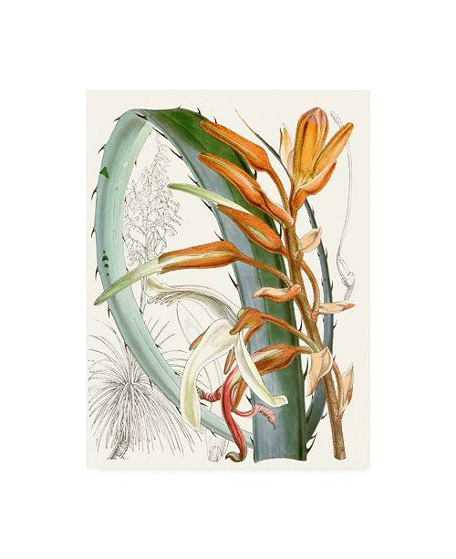"Trademark Global Curtis Tropical Variety III Canvas Art - 15.5"" x 21"""