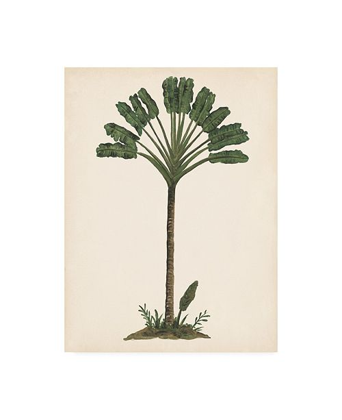 "Trademark Global Melissa Wang Palm Tree Study I Canvas Art - 27"" x 33.5"""