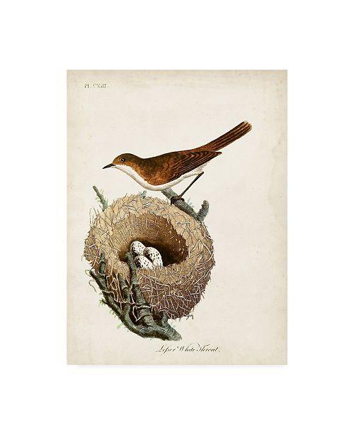 """Trademark Global John Latham Lesser White Throat and Nest Canvas Art - 27"""" x 33.5"""""""