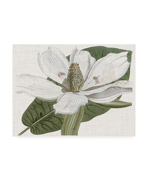 "Trademark Global Curtis Curtis Magnolia II Canvas Art - 15.5"" x 21"""