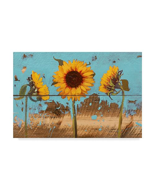 "Trademark Global Sandra Iafrate Sunflowers on Wood IV Canvas Art - 37"" x 49"""
