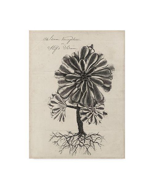 "Trademark Global Robert J. Thornton Thornton Succulents IV Canvas Art - 37"" x 49"""