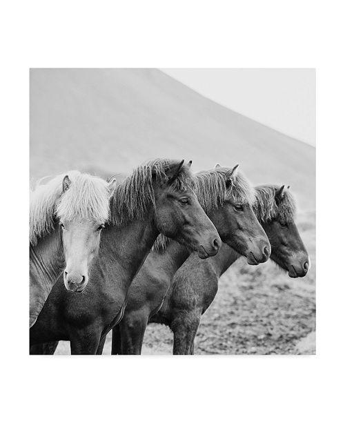 "Trademark Global PH Burchett Black and White Horses IX Canvas Art - 27"" x 33"""