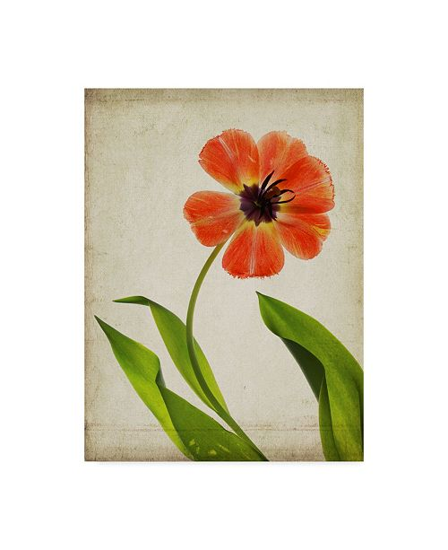 """Trademark Global Judy Stalus Parchment Flowers V Canvas Art - 20"""" x 25"""""""