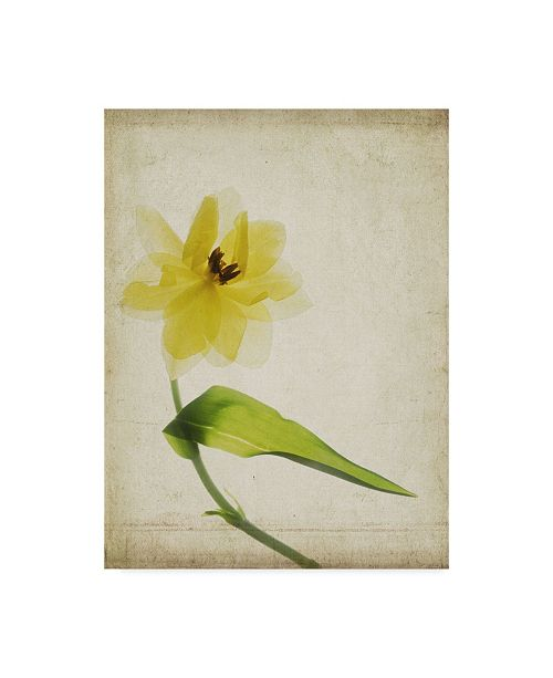 "Trademark Global Judy Stalus Parchment Flowers VII Canvas Art - 37"" x 49"""