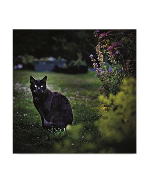 "Trademark Global Christine Sainte-Laudy Black Cat in the Garden Canvas Art - 27"" x 33"""