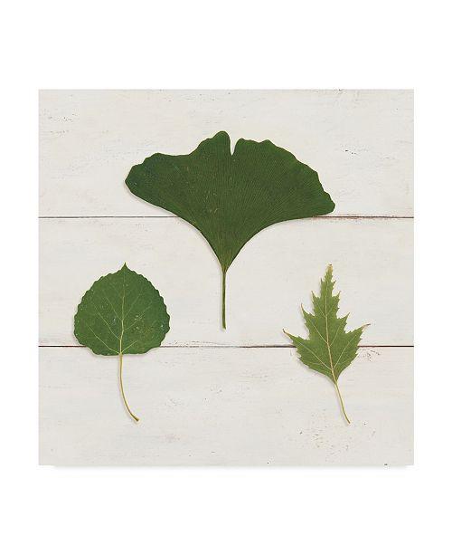 "Trademark Global Wild Apple Portfolio Leaf Chart IV Shiplap Canvas Art - 20"" x 25"""