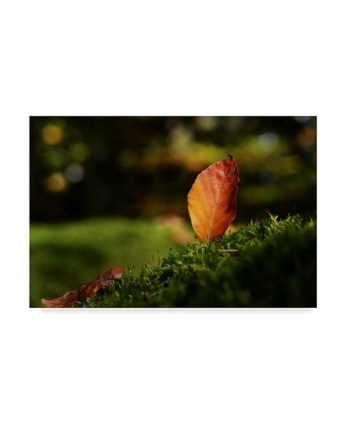 """Trademark Global Philippe Sainte-Laudy Leaf and Ant Canvas Art - 20"""" x 25"""""""