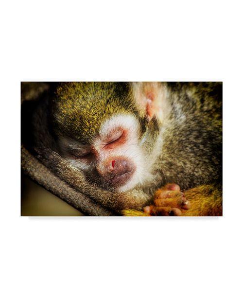 """Trademark Global Pixie Pics Sleeping Monkey Canvas Art - 15"""" x 20"""""""