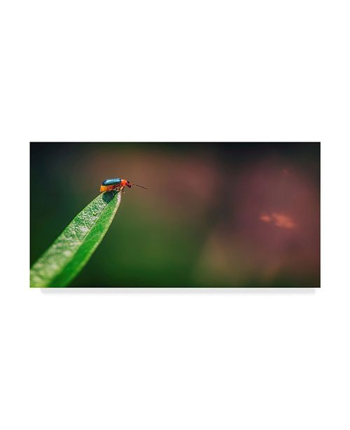 """Trademark Global Pixie Pics Red and Green Bug Canvas Art - 20"""" x 25"""""""