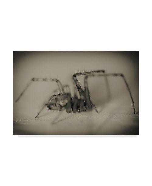 "Trademark Global Pixie Pics Spider 2 Canvas Art - 15"" x 20"""