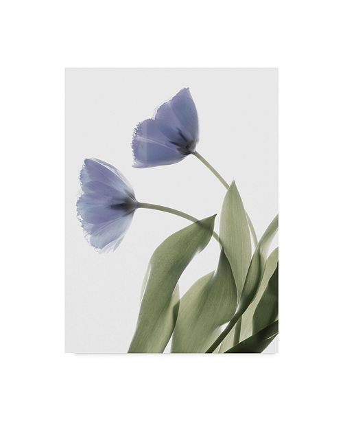 """Trademark Global Judy Stalus Xray Tulip III Canvas Art - 15"""" x 20"""""""