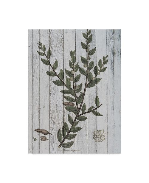 "Trademark Global Studio W Rustic Greenery II Canvas Art - 20"" x 25"""
