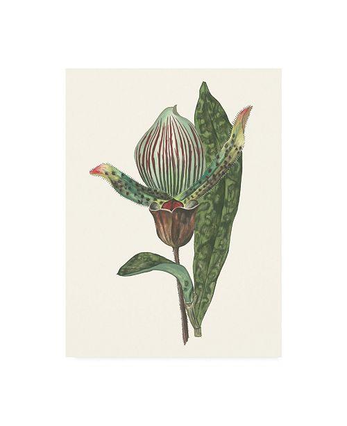 """Trademark Global Melissa Wang Orchid Display III Canvas Art - 20"""" x 25"""""""