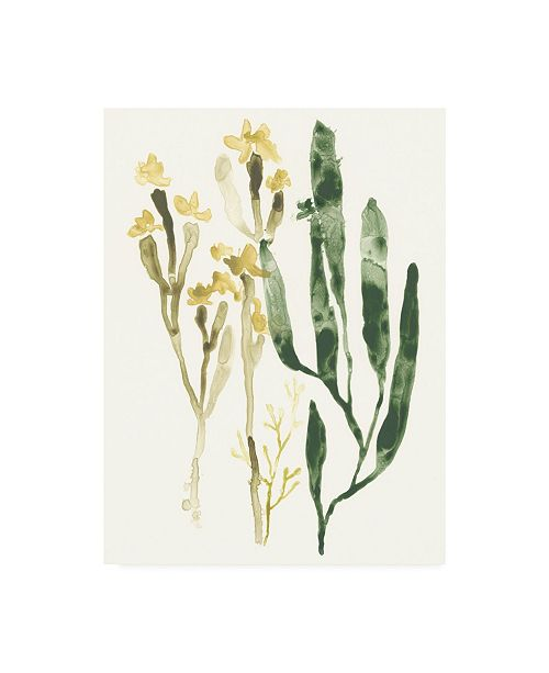 "Trademark Global June Erica Vess Kelp Collection IV Canvas Art - 20"" x 25"""