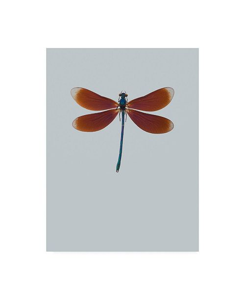 "Trademark Global Incado Dragonfly II Canvas Art - 27"" x 33.5"""
