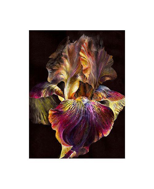 "Trademark Global PhotoINC Studio Iris on Black Canvas Art - 27"" x 33.5"""