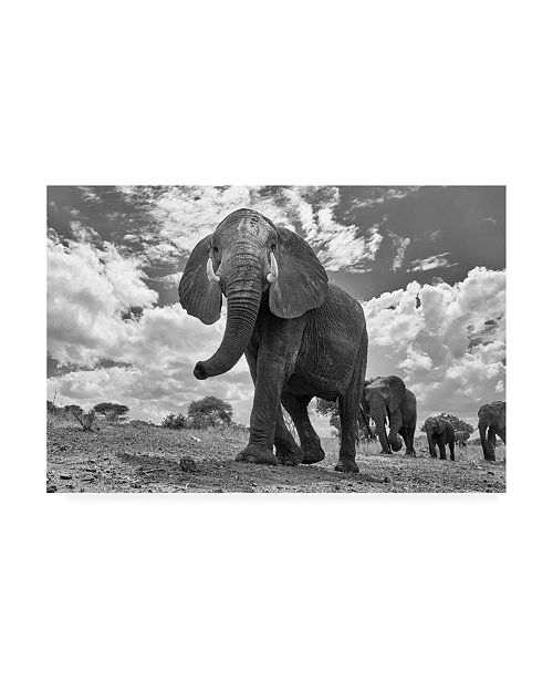 "Trademark Global Peter Hudson Matriarch March Canvas Art - 27"" x 33.5"""