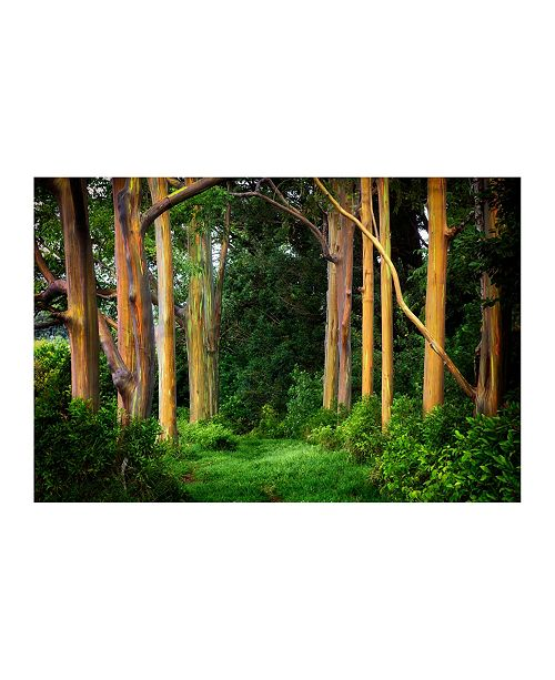 "CHRISTOPHER KNIGHT COLLECTION - Rainbow Eucalyptus Trees Canvas Art, 54"" x 36"""