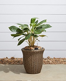 Ocala Curved Oval Wicker Smart Self-Watering Planter