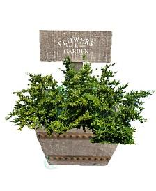 Gardenised Welcome Planter Box