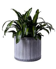 Gardenised Rustic Galvanized Metal Corrugated Round Planter Pot, Large