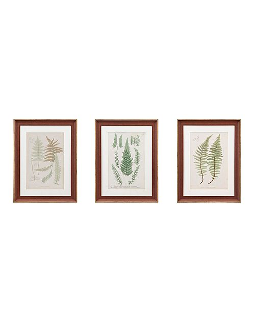 Martha Stewart Collection Martha Stewart Lady Fern Collection Single Mat Framed Graphic 3-Pc Set