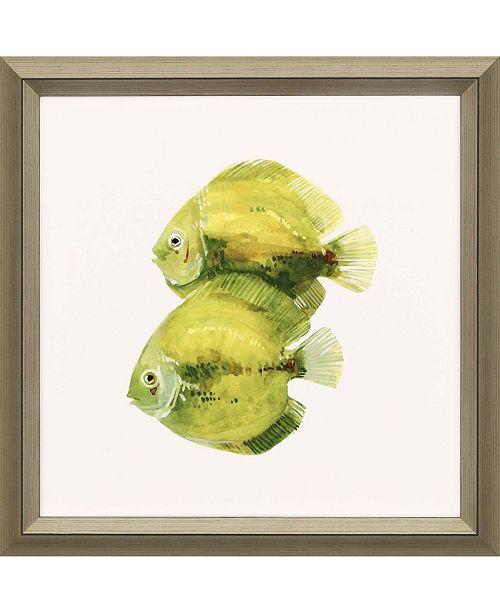"Paragon Discus Fish II Framed Wall Art, 30"" x 30"""