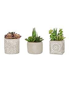 Set of 3 Succulent Plants in Cement Pots