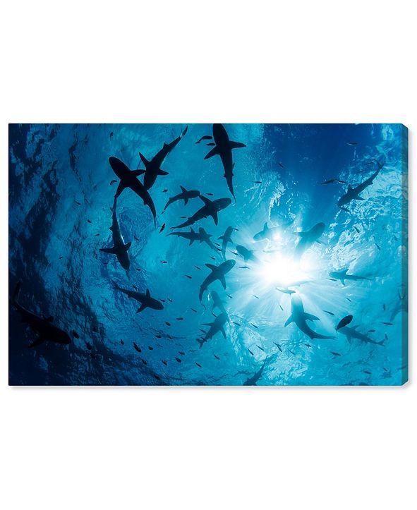 "Oliver Gal Gray Reef Shark Group by David Fleetham Canvas Art, 36"" x 24"""