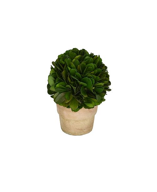 """Mills Floral 4"""" H Preserved Boxwood Ball Topiary"""