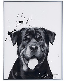"""Rottweiler Pet Paintings on Reverse Printed Glass Encased with a Gunmetal Anodized Frame Wall Art, 24"""" x 18"""" x 1"""""""