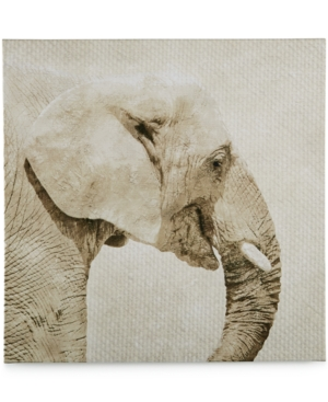 Graham  Brown Canvas Wild Thing Trunk Wall Art