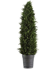 Cypress Cone Topiary