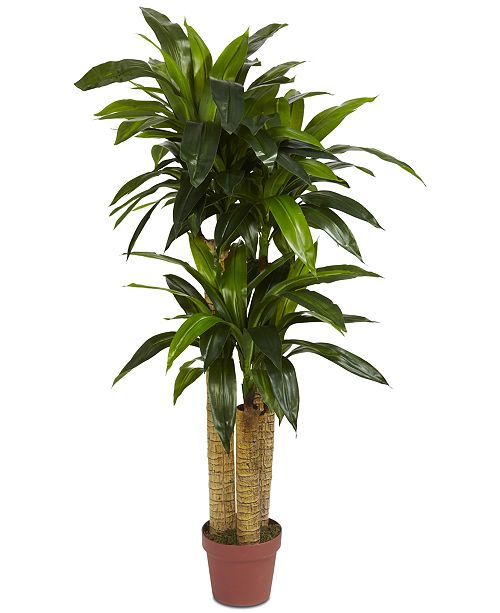 Nearly Natural 4' Corn Stalk Dracaena Real Touch Plant
