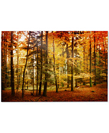 "Philippe Sainte-Laudy Brilliant Fall Color 22"" x 32"" Canvas Art Print"